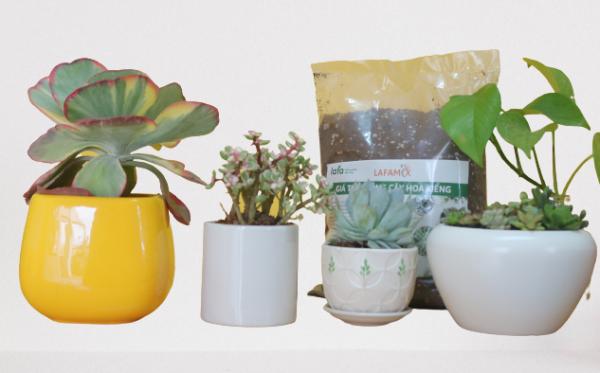 đất hữu cơ lafamix thích hợp trồng hoa kiểng